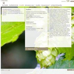 Houblon, Humulus lupulus L., Cannabinacées (même famille que le Chanvre) - Dr.Hauschka Cosmétiques - De la Nature pour l'Etre Humain
