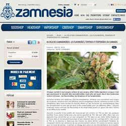 Au-delà des cannabinoïdes : les flavonoïdes, terpènes et terpénoïdes du cannabis - Zamnesia