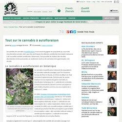 Tout sur le cannabis à autofloraison