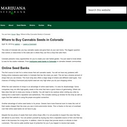 Where to Buy Cannabis Seeds in Colorado
