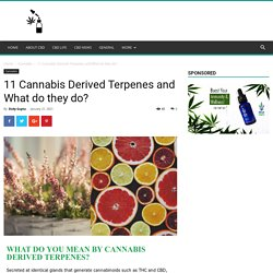 11 Cannabis Derived Terpenes and What do they do?