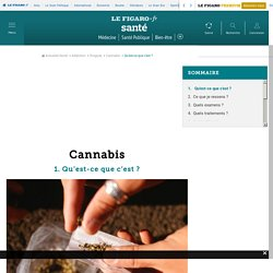 Cannabis : Qu'est-ce que c'est ?