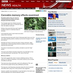 Cannabis memory effects examined