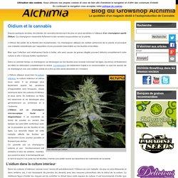 Oidium et le cannabis