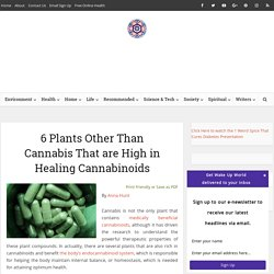 6 Plants Other Than Cannabis That are High in Healing Cannabinoids