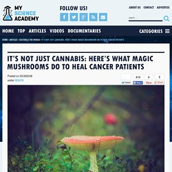 It's Not Just Cannabis: Here's What Magic Mushrooms Do To Heal Cancer Patients