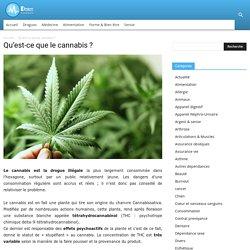 Le cannabis : qu'est-ce que c'est, à quoi ça ressemble