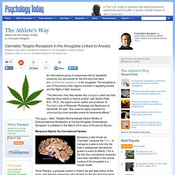 Cannabis Targets Receptors in the Amygdala Linked to Anxiety