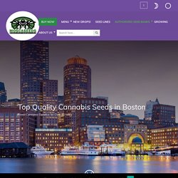 Buy Cannabis Seeds In Boston - MOSCA SEEDS