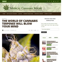 The World of Cannabis Terpenes Will Blow Your Mind - Medical Cannabis Report