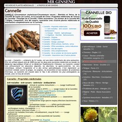 CANNELLE (Cinnamomum)