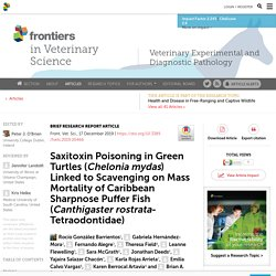 FRONT. VET. SCI. 17/12/19 Saxitoxin Poisoning in Green Turtles (Chelonia mydas) Linked to Scavenging on Mass Mortality of Caribbean Sharpnose Puffer Fish (Canthigaster rostrata-Tetraodontidae)
