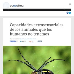 Capacidades extrasensoriales de los animales que los humanos no tenemos