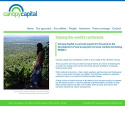 Canopy Capital | Valuing the world's rainforests