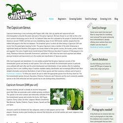 capsicum genus annuum chinense baccatum frutescens pubescens plus wild capsicum species