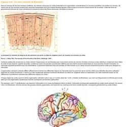 Capsule outil : Les aires corticales de Brodmann