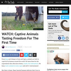 WATCH: Captive Animals Tasting Freedom For The First Time