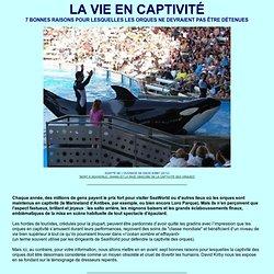 La vie en captivité : 7 raisons de ne pas garder des orques en prison