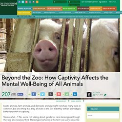 Beyond the Zoo: How Captivity Affects the Mental Well-Being of All Animals