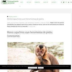 Monos capuchinos usan herramientas de piedra a modo de martillo.