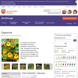 Capucine: semer et planter des capucines