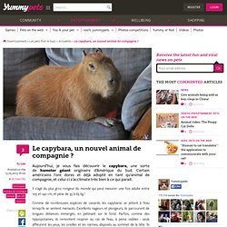Le capybara, un nouvel animal de compagnie ?