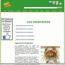 Características de los crustáceos