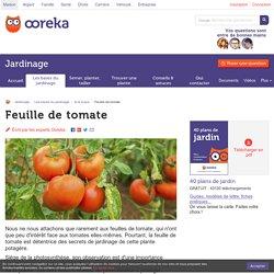 Feuille de tomate : caractéristiques feuilles de tomate - Ooreka