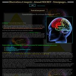 Caractéristiques du cerveau du surdoué - ETRE SURDOUE - PRECOCITE ET DOUANCE : Un handicap plutôt qu'une chance !