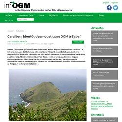 Caraïbes : bientôt des moustiques OGM à Saba ? - Inf'OGM - Veille citoyenne sur les OGM