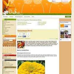 Cârciumăreasa (Zinnia) - Flori de gradina