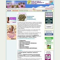 Cardamome (Elettaria cardamomum)