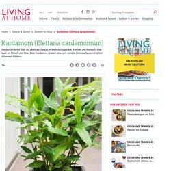 Elettaria cardamomum - die Kübelpflanze im Porträt