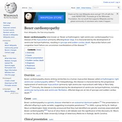 Boxer cardiomyopathy