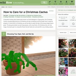 How to Care for a Christmas Cactus: 7 Steps