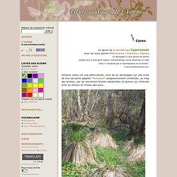 Carex - Fleurs sauvages de l'Yonne