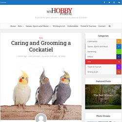 Caring and Grooming a Cockatiel - My Hobby Portal