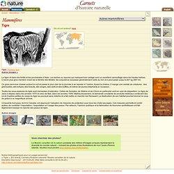 Tigre : Carnets d'histoire naturelle