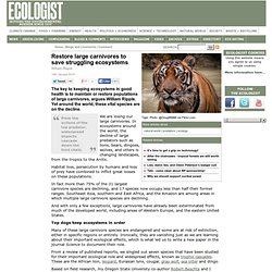 Restore large carnivores to save struggling ecosystems - Comment