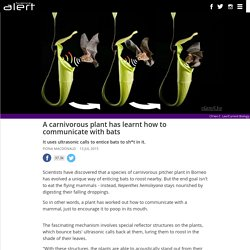 A carnivorous plant has learnt how to communicate with bats