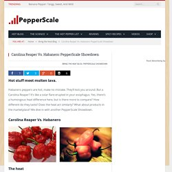 Carolina Reaper Vs. Habanero: PepperScale Showdown - PepperScale