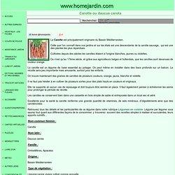 Carotte ou daucus carota, fiche technique complète