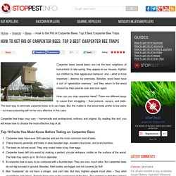 Carpenter bee traps review: How to choose the best one