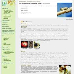 Le Carpocapse des pommes et poires - FREDON Corse