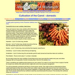 Growing Carrots - Carrot Cultivation Guidance, hints and tips