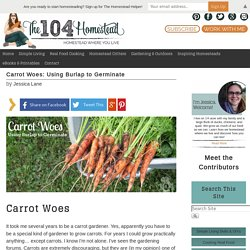 Carrot Woes: Using Burlap to Germinate