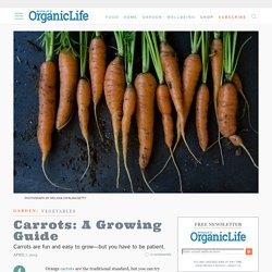 Carrots: A Growing Guide