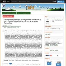 UNIVERSITE DE STRASBOURG 29/11/12 Thèse en ligne : Cartographie génétique et analyse de la résistance au mildiou et à l'oïdium de la vigne chez Muscadinia Rotundifolia