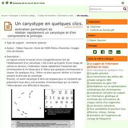 Un caryotype en quelques clics. - Sciences de la vie et de la Terre