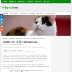 Case Study: Why Are There No Male Calico Cats?